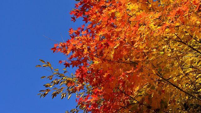 青い空と紅葉のコントラスト