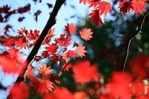 森林公園の色鮮やかな紅葉