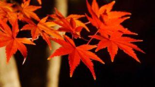 ライトアップに映える紅葉