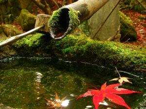 水の上に落ちた美しい紅葉
