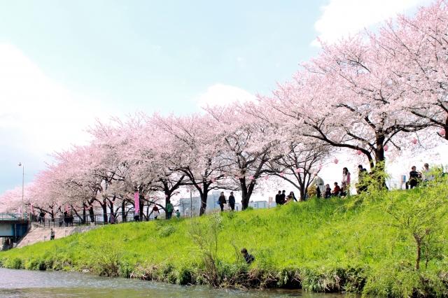 黒目川花まつりの会場風景