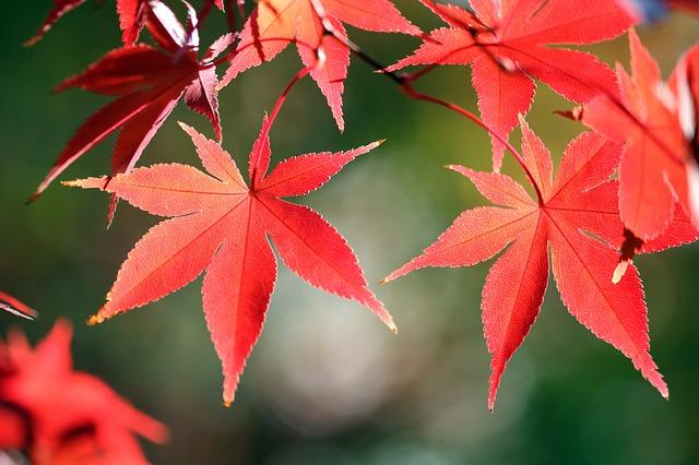 秋の深まりを知らせてくれる紅葉