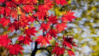 川越の秋を彩る紅葉