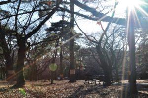 晩秋の大宮公園