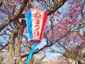 大宮第二公園梅まつりのぼんぼり