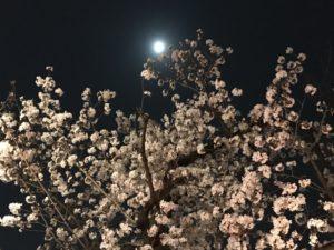 夜の石神井川の桜並木