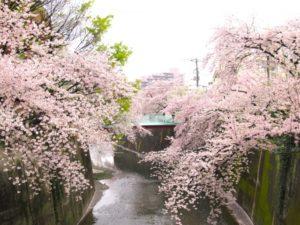 石神井川の桜並木