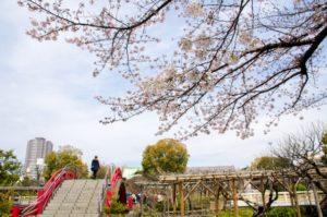 亀戸天神の梅の花