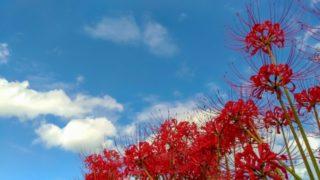 巾着田の彼岸花と秋の空