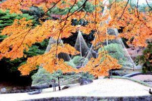 小石川後楽園の紅葉と雪吊り