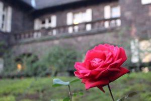 旧古河庭園の洋館とバラ