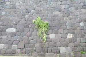 皇居東御苑の石垣