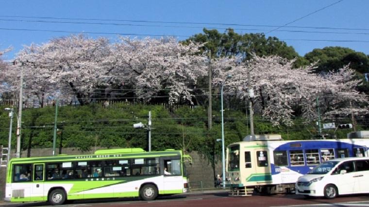 飛鳥山公園の桜と都電