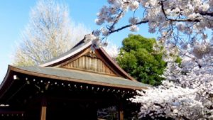 靖国神社の桜